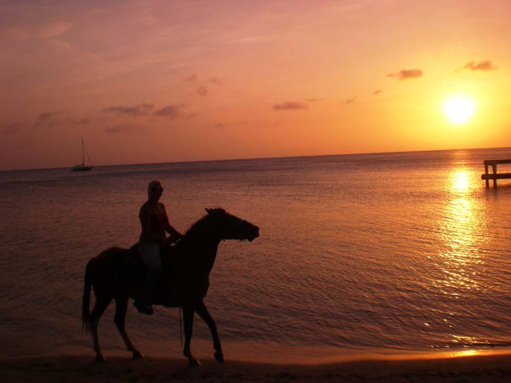 Horse Riding Roatan