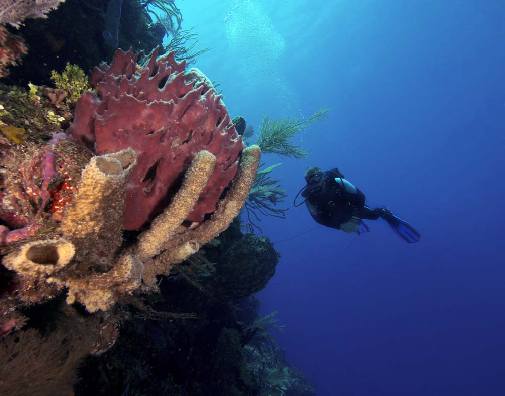 Roatan-Scuba-Diving