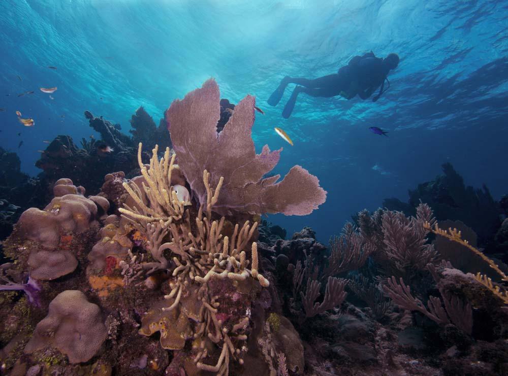 Scuba-Diving-Roatan